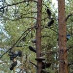 деревья на стоянке у порога АССУ
