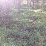 ржавая кровать в лесу
